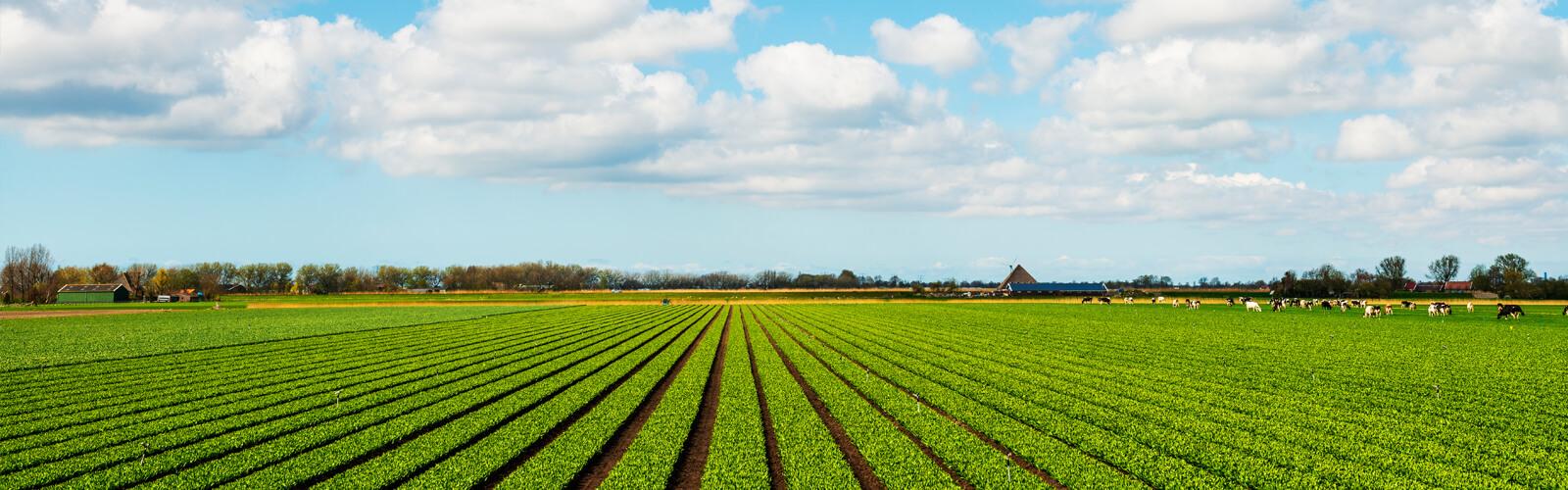 optimized_landbouw.jpg
